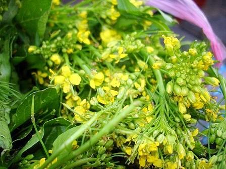 広東菜の花