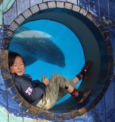 2008年3月18日イルカと友達1