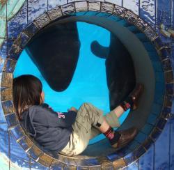 2008年3月18日イルカと友達3