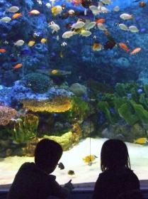 2008年3月18日熱帯魚