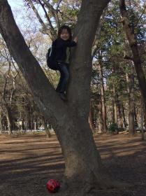 2008年3月22日木登り