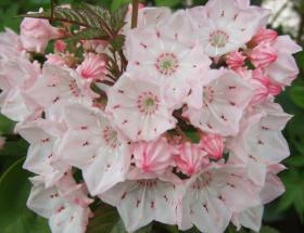 2008年5月22日お花