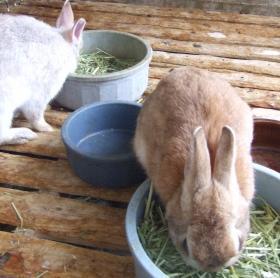 2008年6月24日ウサギ