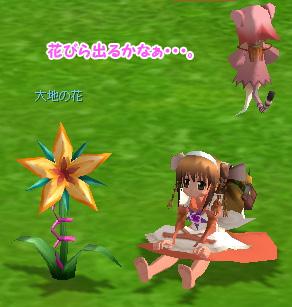 daidai_flower_ss.jpg