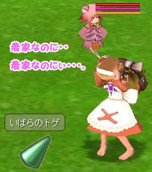 daidai_flower_ss2.jpg