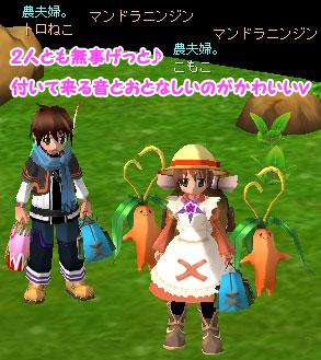 mandora_ninjin_2.jpg