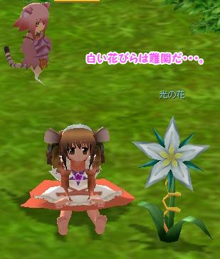 white_flower_ss.jpg