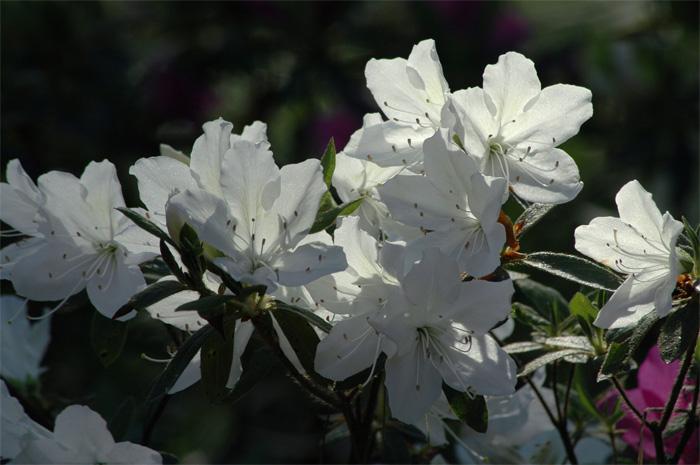 80515-f.jpg