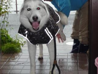 凌、雨の日 011_025
