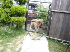 pict-2008.6.8 上近&うーちゃん 010