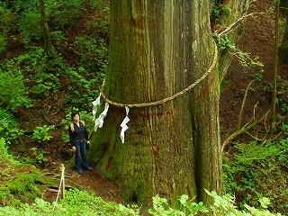 500年木