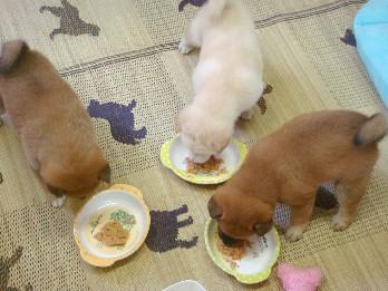 お食事タイム