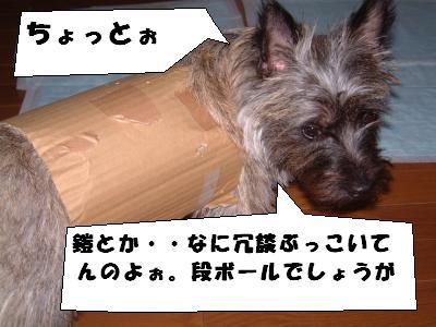 DSCF2621_convert_20080706021341.jpg