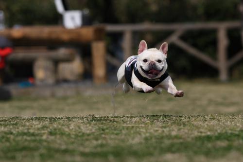 飛びます!飛びます!!