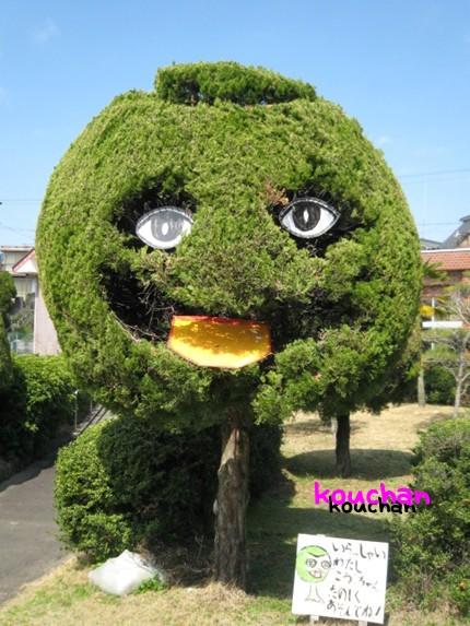 こうちゃんの木