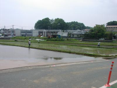 温水田んぼ  5月24日