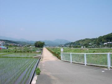 水田 08,6,15②