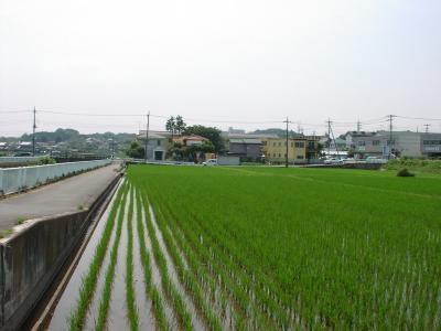 水田②08,6,27