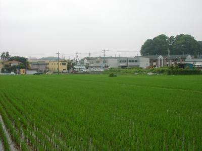 水田 08,7,1