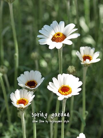 springgarden11