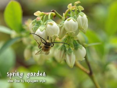 springgarden17