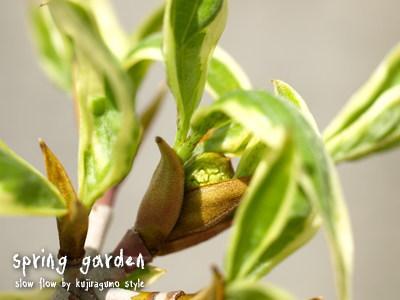 springgarden18