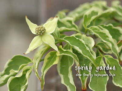 springgarden29