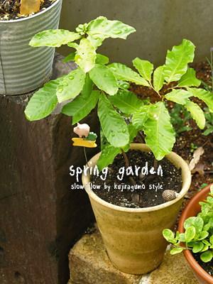 springgarden30