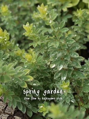 springgarden31