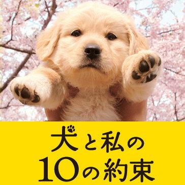 犬10-01