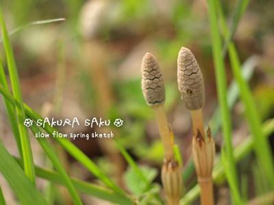 sakurasaku14