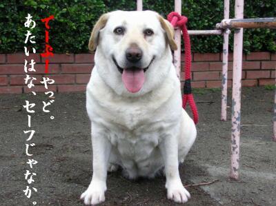 pu-san-purin-13.jpg