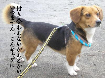 pu-san-satuma-15.jpg