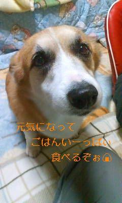 shi-20080130013155_ed.jpg