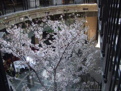 サンローゼ地下のタブローズには桜