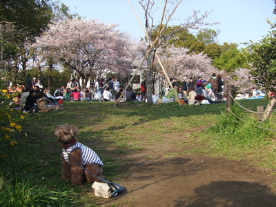日曜日の西郷山公園