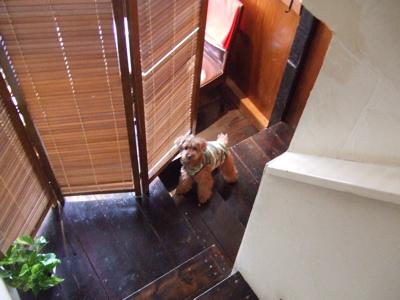 139 階段下で待つkuma