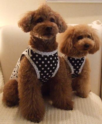D+Diamondsオリジナル犬服 08年夏 水玉(ブラック)ノースリーブ