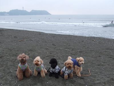 湘南の海で記念撮影