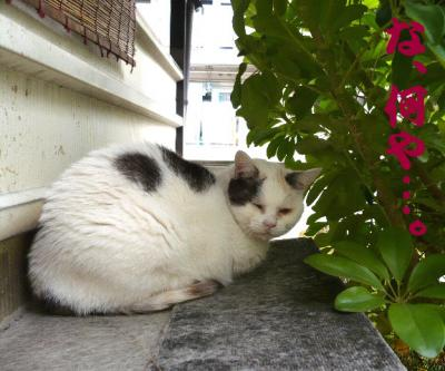 日記4・4~眠いネコ1
