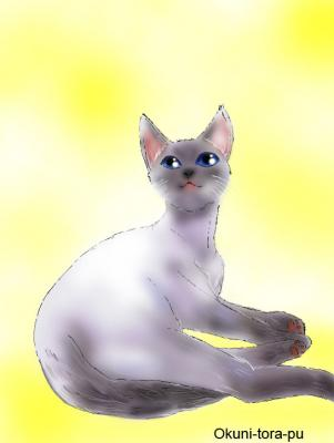 猫~シャムネコ