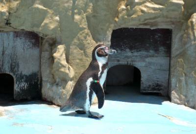 日記6・22ペンギン1