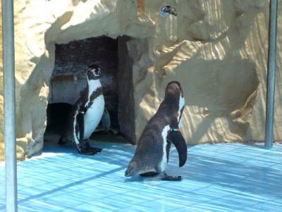日記6・22ペンギン2