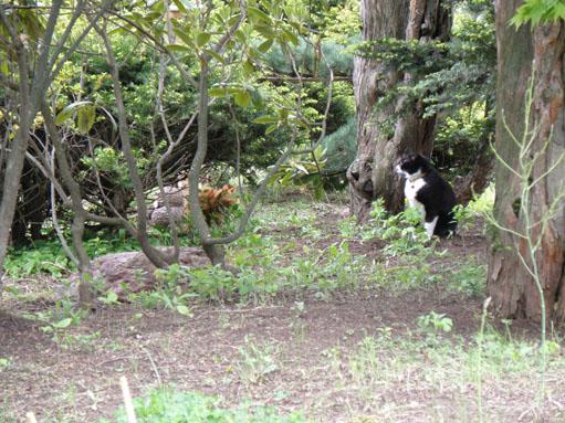 トラちゃんとチョビ