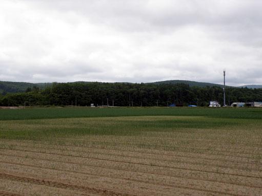 たまねぎ畑
