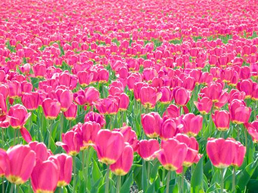 真っ赤な絨毯*:.。☆..。.(´∀`人)