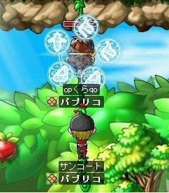 kabuto200805112.jpg