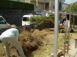 庭木を掘り起こし・・・