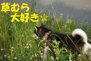 s_DSCF0506.jpg