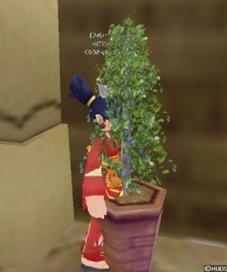 鉢植えミミック
